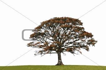 Abstract Autumn Oak