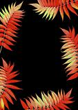 Flaming Scarlet Rowan Leaves