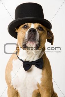 Groom dog