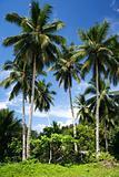 palawan palms