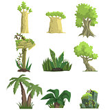 Tropical Forest Landscape Elements