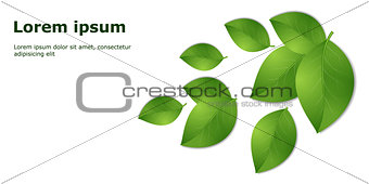 green leaves template