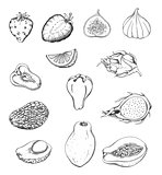 Pencil drawn fruits