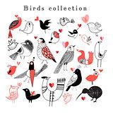 Bright set of birds