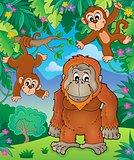Orangutan theme image 3