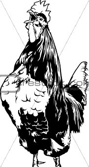 Crowing Rooster