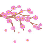 Watercolor sakura branch with blooming flowers.
