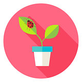 Flower Pot with Plant and Ladybug Circle Icon