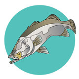 Barramundi Fish Logo