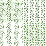 Set of seamless pattern branches of eucalyptus and Camphor laurel. Vector green floral backgrounds