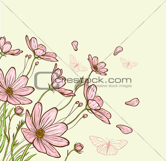 Cosmos flowers and butterfly