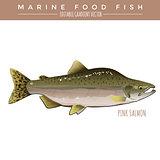 Pink Salmon. Marine Food Fish