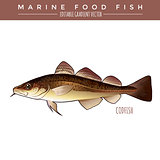 Codfish. Marine Food Fish