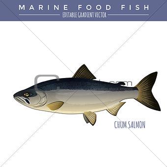 Chum Salmon. Marine Food Fish