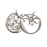Tomatoes in vintage style. Line art vector illustration