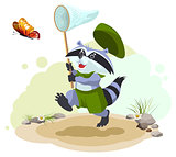 Scout raccoon butterfly catches. Entomologist with butterfly net. Summer leisure