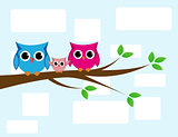 cute owls couple with baby owl