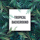 Summer tropical hawaiian background with palm tree leavs and exotic plants