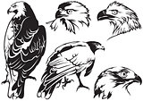 Eagle Tattoo Drawings