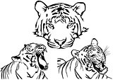Tiger Tattoo Drawings
