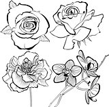 poppy   rose  orchid flowers collection  silhouette vector