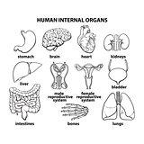 The internal organs of man, set