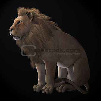 African Lion on Black