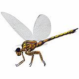 Meganeura Dragonfly Side Profile