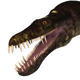 Nothosaurus Dinosaur Head