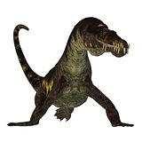 Nothosaurus on White