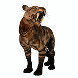 Saber-tooth Cat Growl