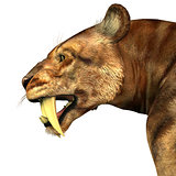 Saber-tooth Cat Head