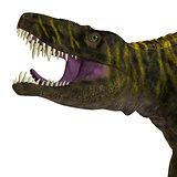 Batrachotomus Dinosaur Head
