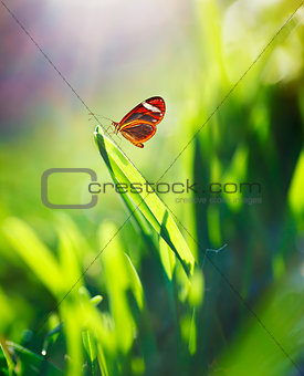 Beautiful butterfly on the field