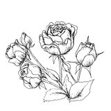 Highly detailed hand drawn roses.
