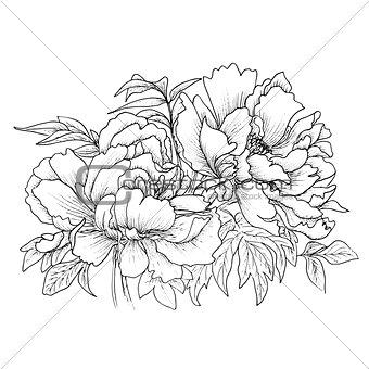 Beautiful hand drawn illustration of