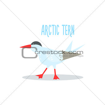 Arctic Tern Vector Illustration