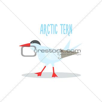 Arctic Tern Vector Illustration