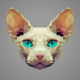 Sphynx cat low poly portrait