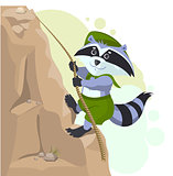 Climber descending rope. Scout raccoon climbs rock