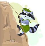 Climber descending rope. Scout raccoon climbs rock