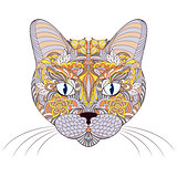 head of cat on white background
