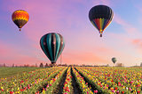 Hot Air Balloons at Tulip Fields