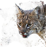 Wild Bobcat Watercolor