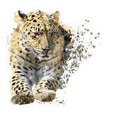 Leopard Portrait Watercolor