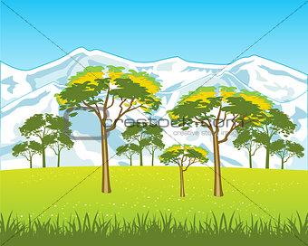 Beautiful year landscape