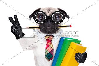 smart school dog