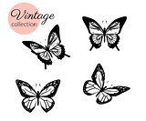 Set of four black and white butterflies silhouette with open wings