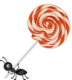Lollipop being carried by a ant