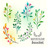 watercolour Floral Branches